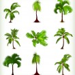 Set of various palm trees. Vector illustration - Vettoriali Stock