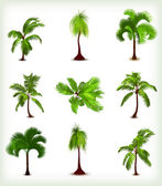 Set of various palm trees. Vector illustration — Vector de stock