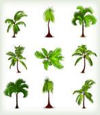 çeşitli palmiye ağaçları kümesi. vektör çizim — Stok Vektör
