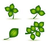 Set green leafs. Vector — Stock Vector