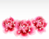 Pink roses Floral Design Elements. Vector — 图库矢量图片