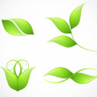 Set of green leaf's images. Vector — Stock Vector #36920261