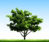Green tree on grass. Vector — Stock Vector