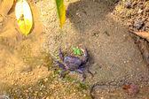 Granchio sulla sabbia — Foto Stock