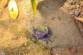 Krab op zand — Stockfoto