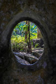 Wall with a hole and tropical forest — Stock Photo