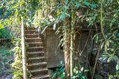 Jardim mágico da floresta — Fotografia Stock