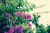 Flowers holding on air with blue sky — Stock Photo