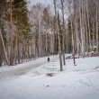 Winter forest with snow — Stock Photo #38376899
