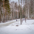 Winter forest with snow — Stock Photo #38420651