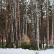 Winter forest with snow and houses — Stock Photo #38559121
