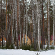Winter forest with snow and houses — Stock Photo