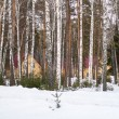 Winter forest with snow and houses — Stock Photo #38559443