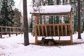 Deer and roe deer lying at the feeder — Stock Photo