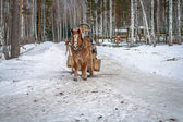 Winter road with a horse — 图库照片