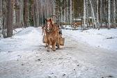 Winter weg met een paard — Stockfoto