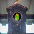 Bird house with colorful parrot — Stock Photo #39991061