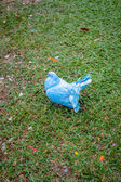 Blue pigeon on the grass — Stock Photo