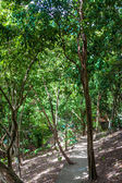 Footpath in summer tropical forest — Stock Photo