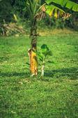 Planten en palmbomen in tropische jungle — Stockfoto