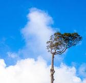 Drzewa przeciw błękitne niebo — Zdjęcie stockowe