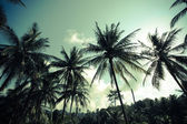 Vintage palm trees at tropical coast — Stockfoto