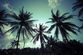 Vintage palm trees at tropical coast — Stock Photo