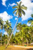 Palm over the sky — Foto de Stock