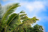 View of palm, trees against sky — Stock Photo