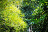 Beautiful green leaves on trees — Stock Photo