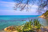 Tree branches over the ocean in Thailand — Stock fotografie