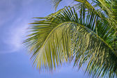 Palm tree on the sky — Stockfoto
