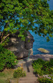 Trees on the Sea Coast — Foto Stock