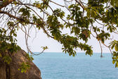 Trees on the Sea Coast on the island — Stockfoto