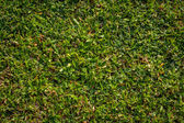 Green grass texture — Photo