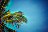 Palm tree in the blue sunny sky — Stock Photo