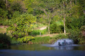 Park with pond and fountains — Stockfoto