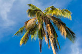 Palm tree in the blue sunny sky — Foto de Stock
