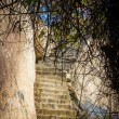 Steps in the rocks and tree — Stock Photo