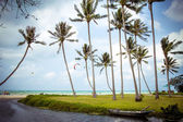 Pond, boat and sea among palm trees — Stock Photo