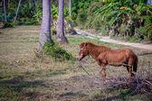 Horse grazing in lush green pasture — Stockfoto