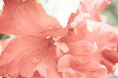 Beautiful spring flower wet with dew drops — Zdjęcie stockowe