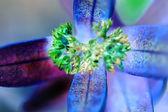 Abstract  green flowers with blue leafs — Stock Photo