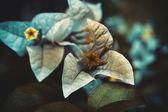 Blue - orange flower — Stock fotografie