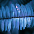 Abstract blue fern branch close-up — Stock Photo #45261307