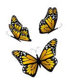 Three butterflies in yellow tones. Vector — Stock Vector