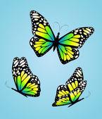 Üç renkli kelebekler. vektör — Stok Vektör