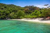 Tropical white sand beach with trees. — Stock Photo