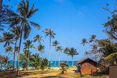 Tropical palms and beach — Foto de Stock