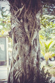 Closeup of banyan tree trunk roots with carvings  in retro colours — Photo